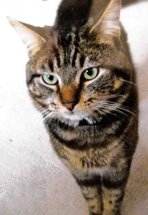 More cat poisonings spark online support group
